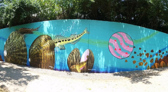 Southeast freshwater mussels mural