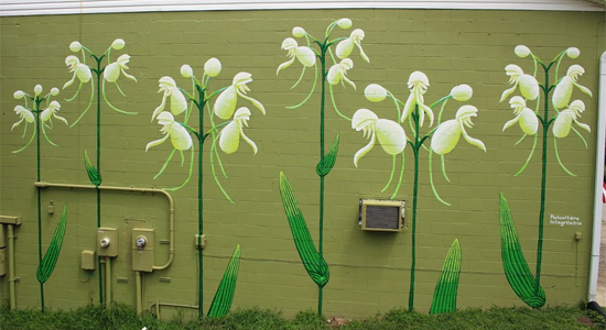 White fringeless orchid mural