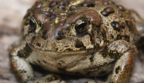 death of a toad essay