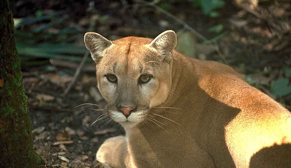 Parasites and Diseases of Wild Mammals in Florida