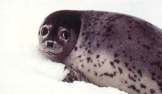 Seal Network description