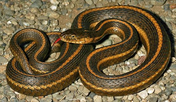 Giant underwater snake - photo#19