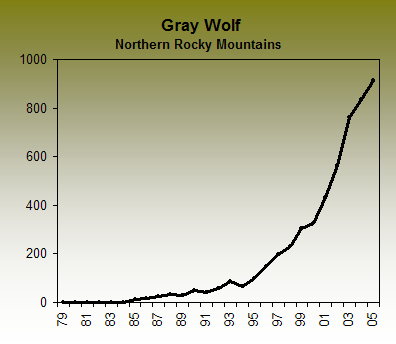 the importance of wolves in yellowstone The wolves of yellowstone gray wolves into yellowstone is one of the most important wildlife conservation projects ever under-taken the yellowstone ecosystem now contains all of its.
