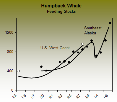 blue whale population data