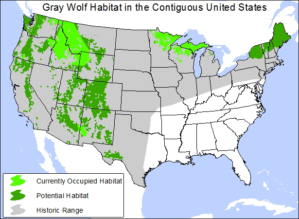 MapGray Wolf Habitat In The Contiguous United States - Us amphibian distribution maps
