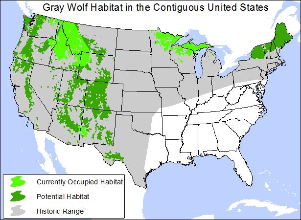 gray wolf po courtesy flickr nickynj