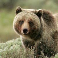 Grizzly bear photo, Trump lawsuits