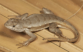 Endangered Species Act Protection Sought for 17 Rare Amphibians and Reptiles in Southeast