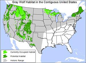 Gray wolf habitat map