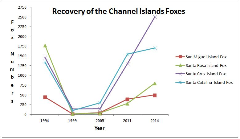 Endangered species act success channel islands foxes determined island fox graph altavistaventures Gallery