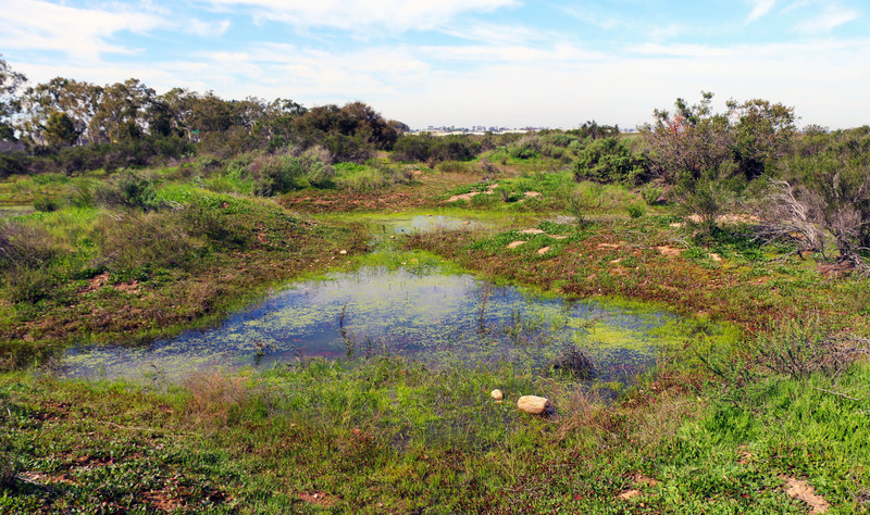 California vernal pools