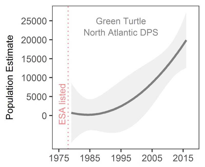 Green sea turtle population