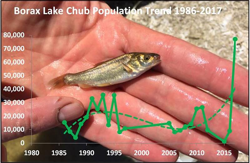 Borax Lake chub population graph