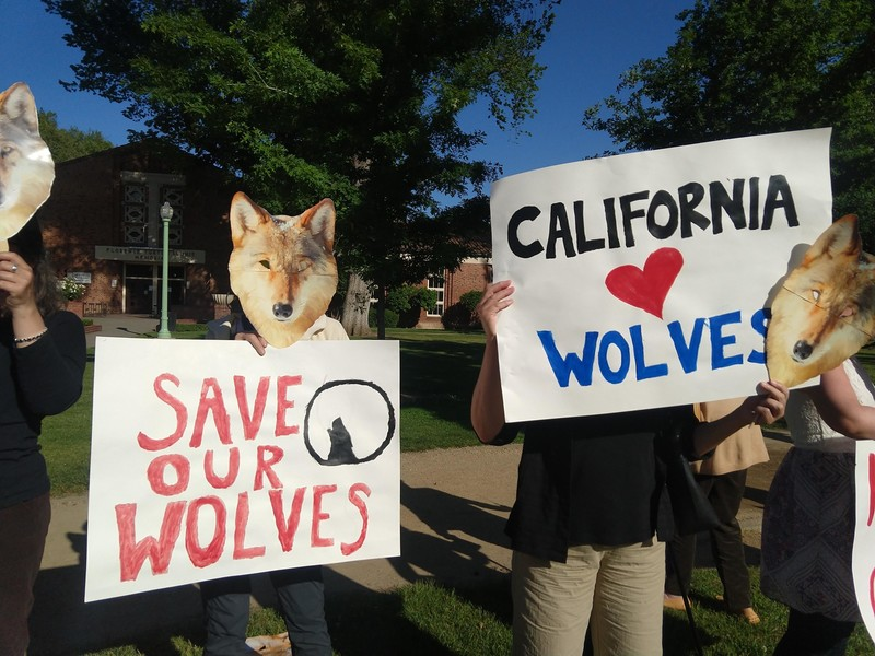 Sacramento wolf hearing