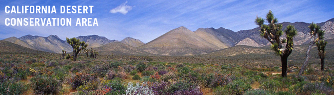 Center for Biological Diversity: CALIFORNIA DESERT CONSERVATION AREA
