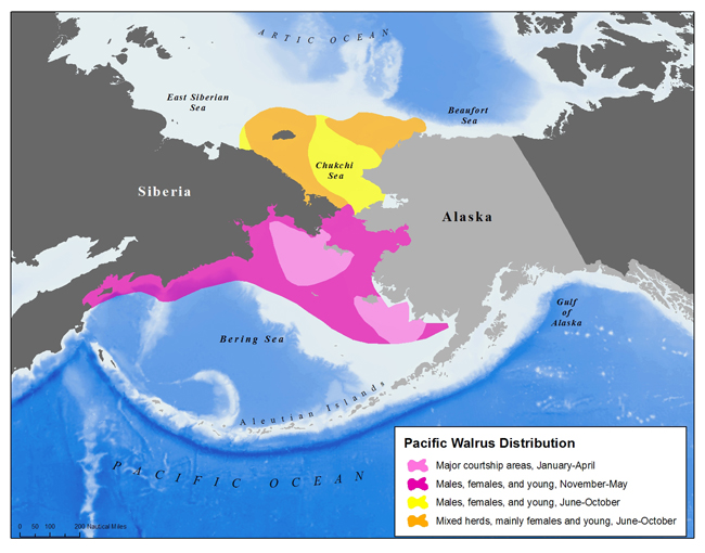 Distribution Of The Pacific Walrus