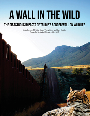 Center report: A Wall in the Wild