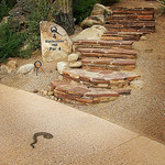 Tiger_rattlesnake_Oro_Valley_AZ_Melissa Amarello_FPWC.jpg