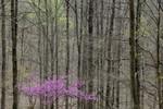 4_Wayne_National_Forest_Marietta_Unit_Taylor_McKinnon_FPWC.JPG