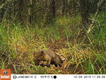 Humboldt-Marten-Mark-Linnell-US-Forest-Service_FPWC.jpg