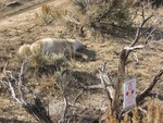 M44 Dead Wolf or Coyote near POISON sign 2016-05813_Partial 11_Item 1(New Mexico) 12.pdf