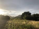 Photo_Oak_Flat_By_Russ_McSpadden_Center_for_Biological_Diversity (1).JPEG