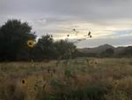 Photo_Oak_Flat_By_Russ_McSpadden_Center_for_Biological_Diversity (6).JPEG