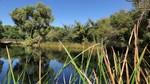 San_Bernardino_National_Wildlife_Refuge_and_Beyond_Wetlands_Russ_McSpadden_Center_For_Biological_Diversity_FPWC.mp4