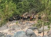 East_Verde_River_Bull_Springs_Allotment_COWS_Center_FPWC.jpg