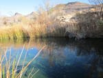 Point_of_Rocks_ Springs_at_Ash_Meadows_National_Wild_Life_Refuge_Nevada_Srping_Snail_Habitat_Landscape_Tierra_Curry_FPWC.JPG