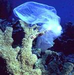 Coral_Plastic_Ocean_NOAA_FPWC.jpg
