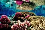 Coral_Reef_at Palmyra_Atoll_National_Wildlife_Refuge_Jim_Maragos_USFWS_Pacific_FPWC.jpg