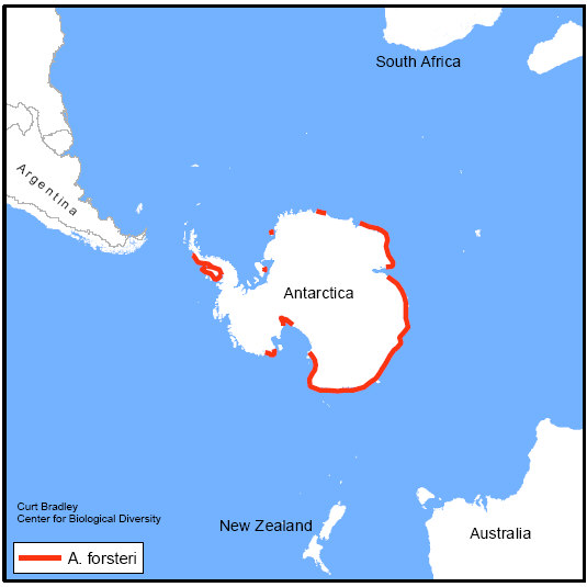 Emperor penguin range range map publicscrutiny Images