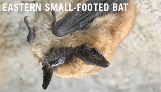 white nose syndrome research paper The fact that you found this web site indicates that you are already aware of the white-nose syndrome on wwwwhite-noseinfo a paper on european bats.